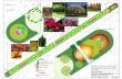 """Ново озеленяване и 63 нови широколистни дървета ще има на мястото на брезите на ул. """"Вичо Грънчаров"""""""