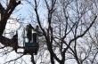 """Сухи и болни клони от дървета по ул. """"Георги Измирлиев"""" премахват работниците от """"Озеленяване"""""""